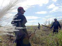 Leer más: Costa Rica - Pasividad en registro como usuarios de mano de obra migrante. Foto: nacion.com