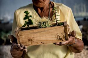 Basilia Lugo Martínez, hermana de Maria de la Luz y un miembro clave en esta cooperativa, inspecciona las cajas diseñadas para la venta de sus cactus a Walmart. El logotipo del grupo se encuentra en el lado inferior derecho. Foto de Karen Kasmauski para Catholic Relief Services.